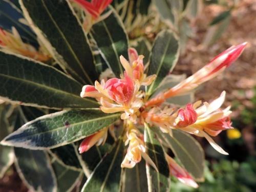 Florilège de couleurs au Gachignard