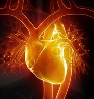 Al Wadji : union des 2 cœurs physique et spirituel