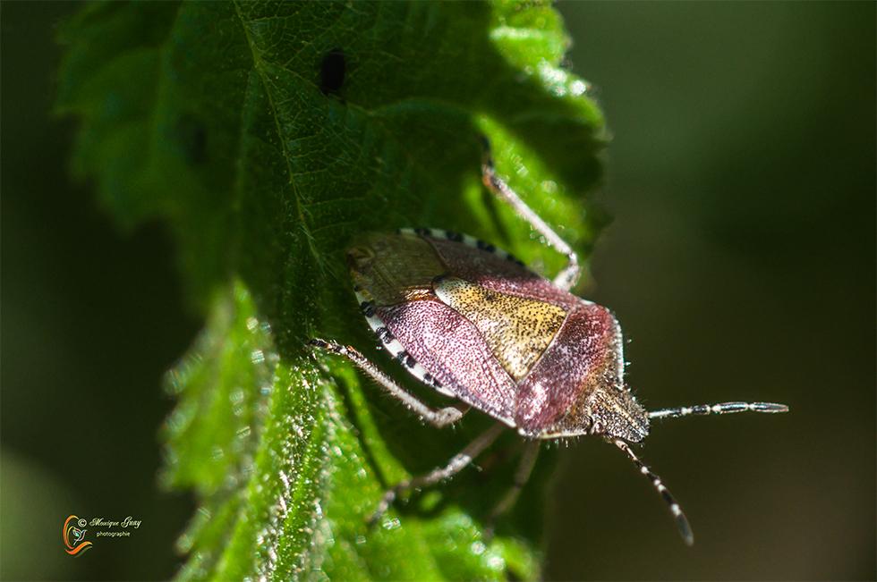 Insecte en sous-bois