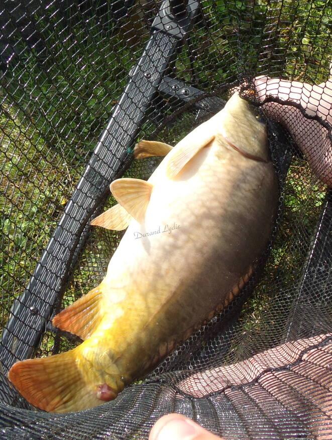Pêche au coup à l'étang de Villedomain