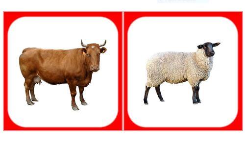 Images classifiées : Les animaux de la ferme