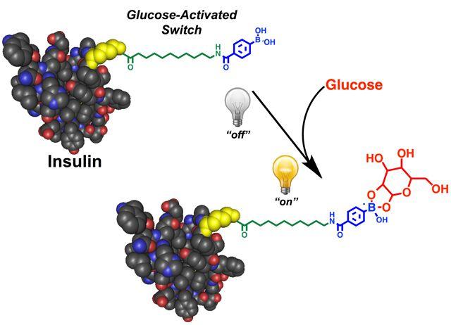 L'insuline modifiée s'active automatiquement quand le niveau de glucose des patients atteints de diabète est trop élevé dans le sang. © Matthew Webber