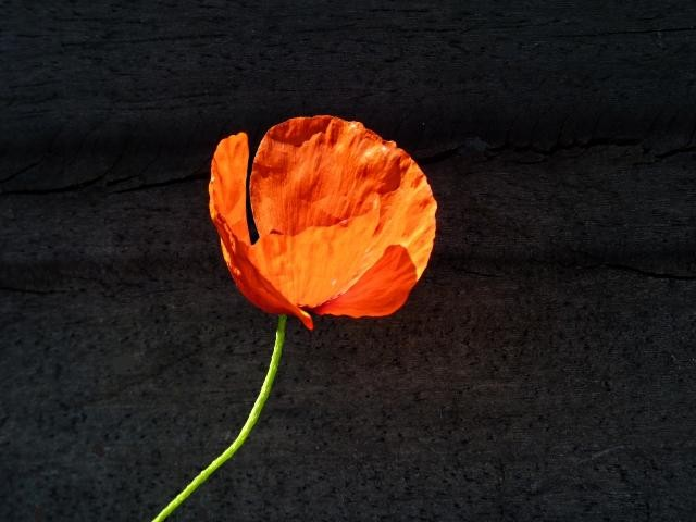Flore lorraine 1 mp13 11 06 2010