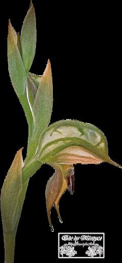 Flower's 6.
