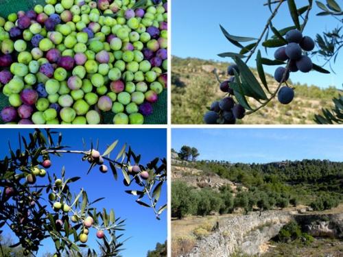 """Commande groupée d'huile d'olive """"bio"""" de Baronia de Cabacès"""