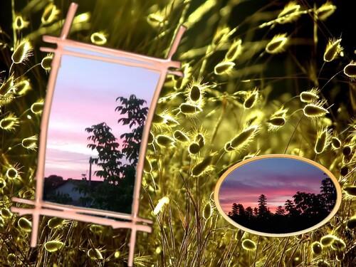 Carte chat et  coucher de soleil