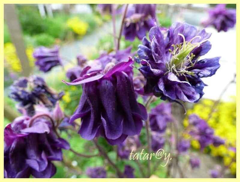 Quelques fleurs ......