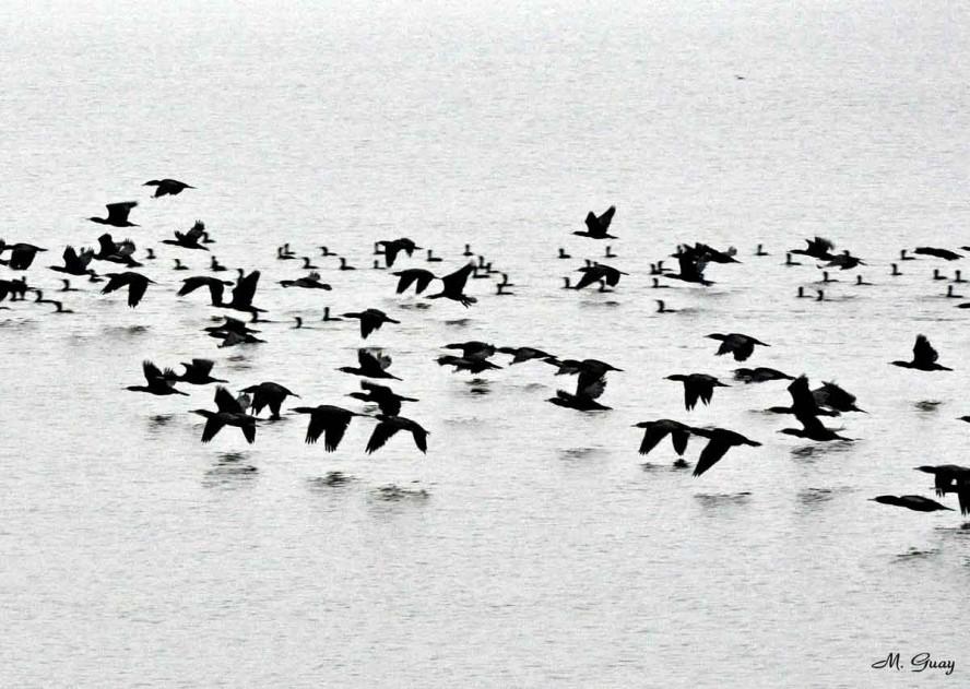 vol-de-foulques-rec-2799