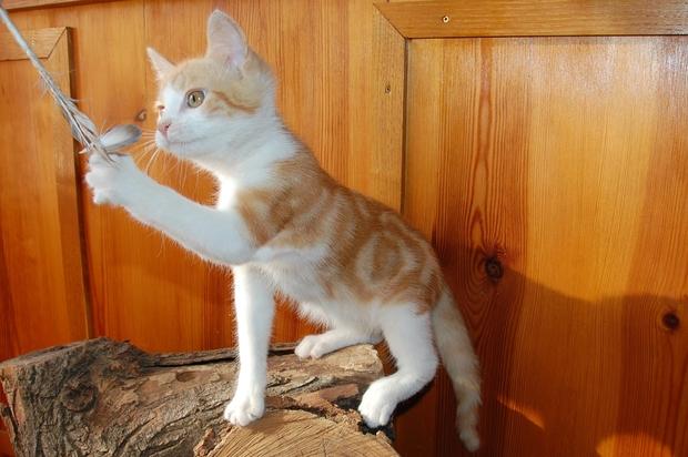 chaton24juilletq