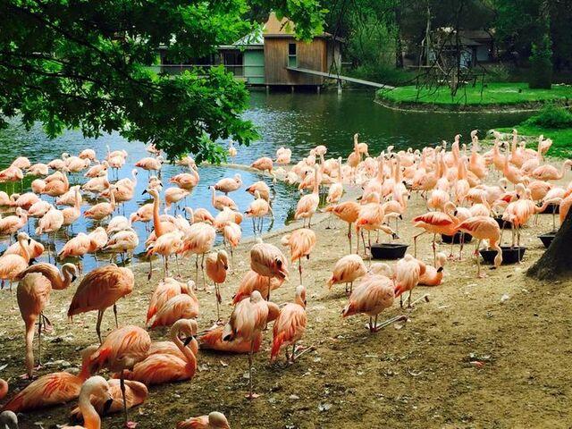 Fin de la visite Zoo de La Palmyre.