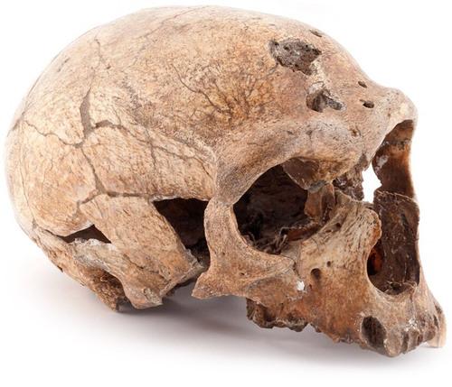 --- Source : Le Monde diplomatique --- L'Homme de la Chapelle-aux-Saints --- paléolithique moyen --- image/photo pouvant être protégée par Copyright ou autre ---