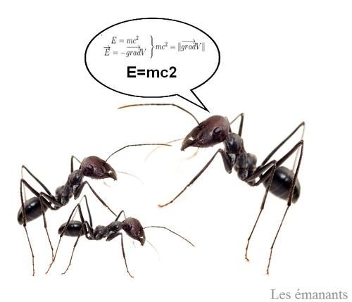 Les insectes sont ils intelligents ?