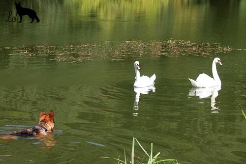 Balade aux étangs de la Minière le 27/07/13