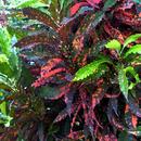 Des variétés de couleurs étonnantes - Photo : Karin