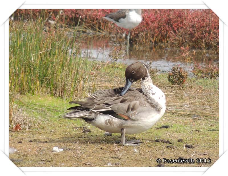 Visite à la réserve ornithologique du Teich - 2/8