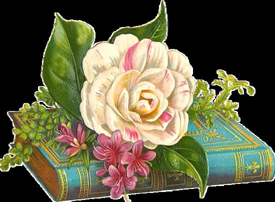défi pour Fée Capucine ( pour toi ses roses )