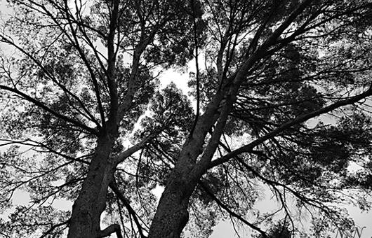 Des arbres, tanka