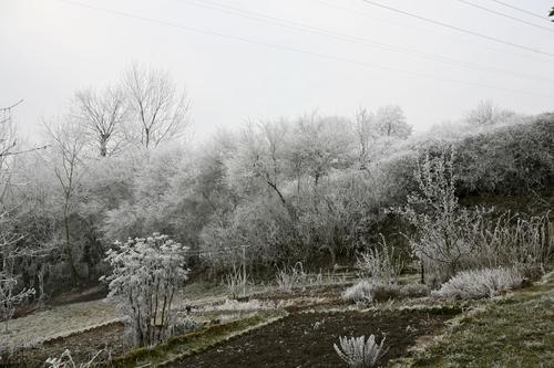 Mon jardin,hier matin