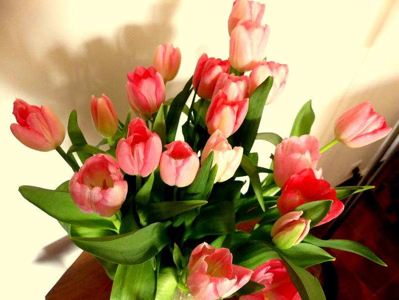 Tulipomania........