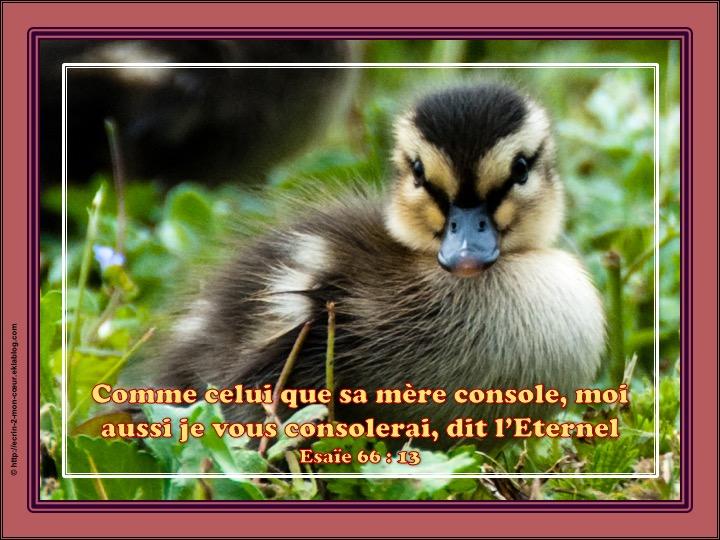 Je vous consolerai - Esaïe 66 : 13