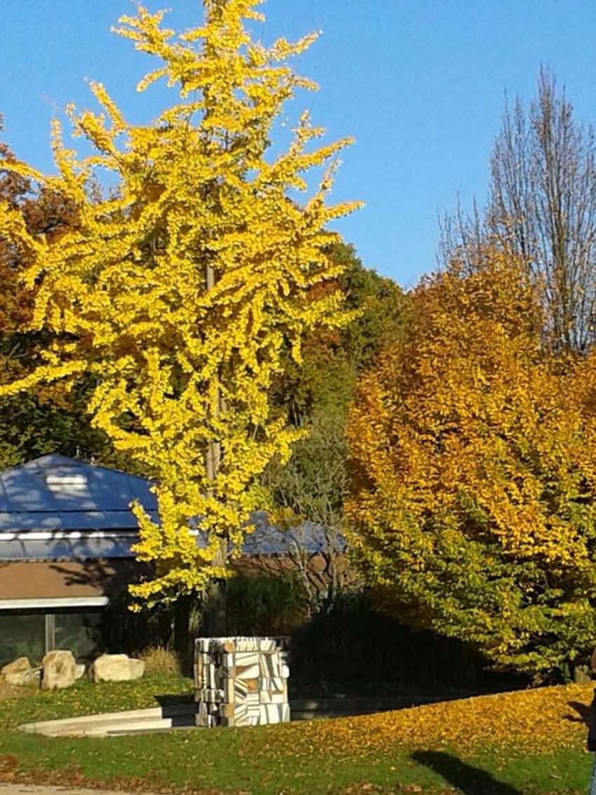 Le parc floral de VINCENNES en automne