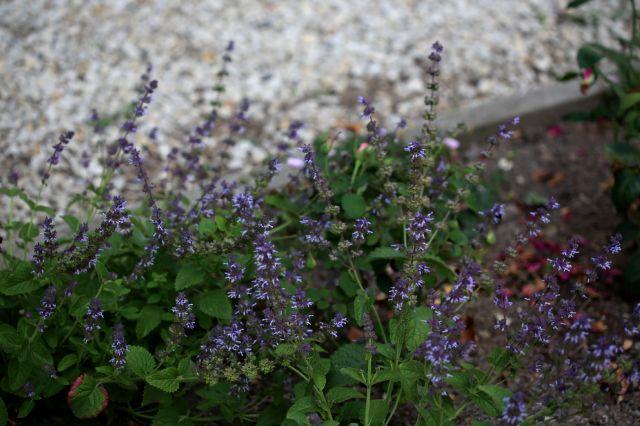 Plantes de bordure (2/2)
