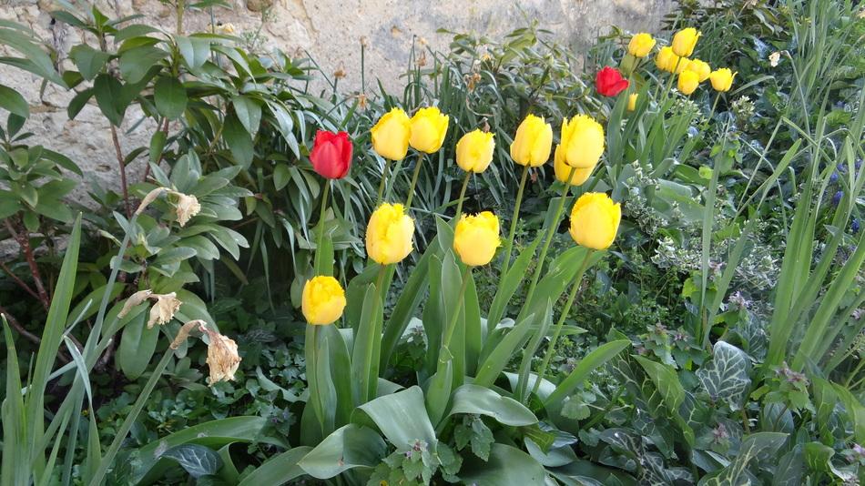 Les Fleurs de Fin de Semaine...
