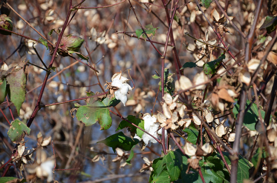 aspendos sidé antalya turquie schnoebelen
