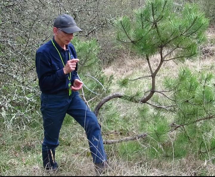 Géobiologie et les arbres