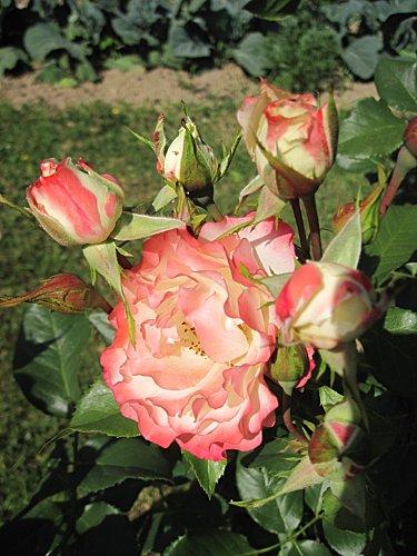 Fleurs 1022