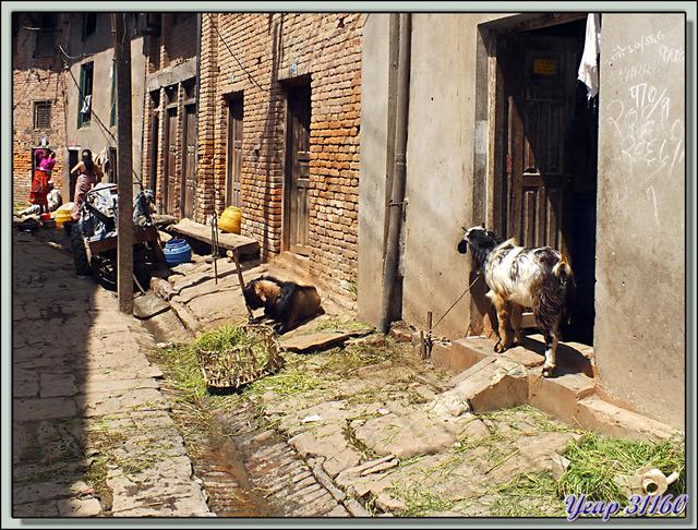 Blog de images-du-pays-des-ours : Images du Pays des Ours (et d'ailleurs ...), Mais non, Monsieur, pas dans ce sens ... Khokana - Népal