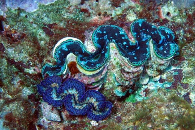 Barrière de corail à Nouméa