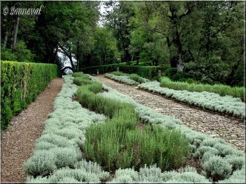 Les Jardins Suspendus de Marqueyssac Dordogne l'Allée des Romarins