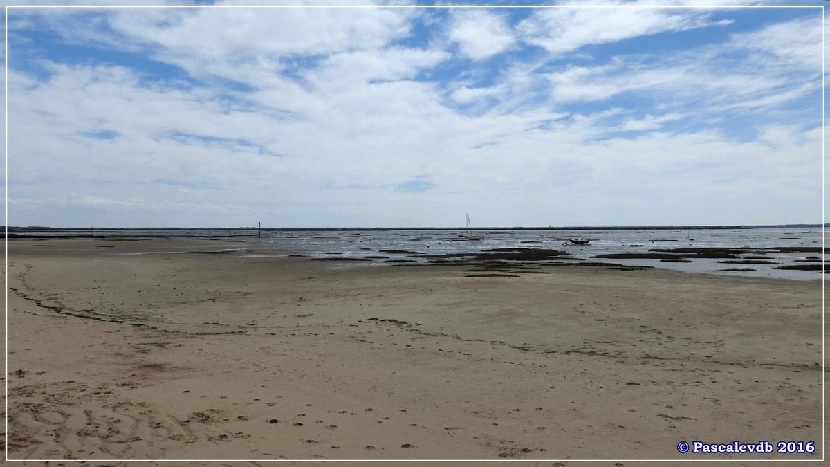 Sur le sentier du littoral entre Lanton et Cassy - fin Mars 2016 - 1/8