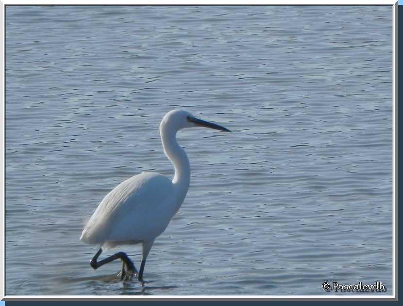 Un tour au parc ornithologique du Teich