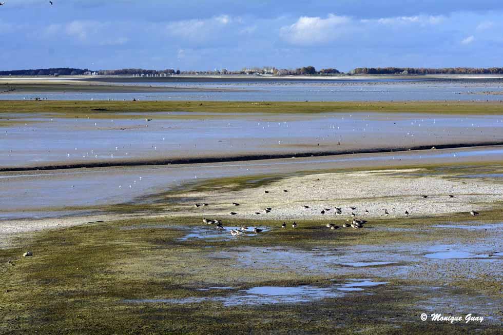 Lac du Der peu après 15h