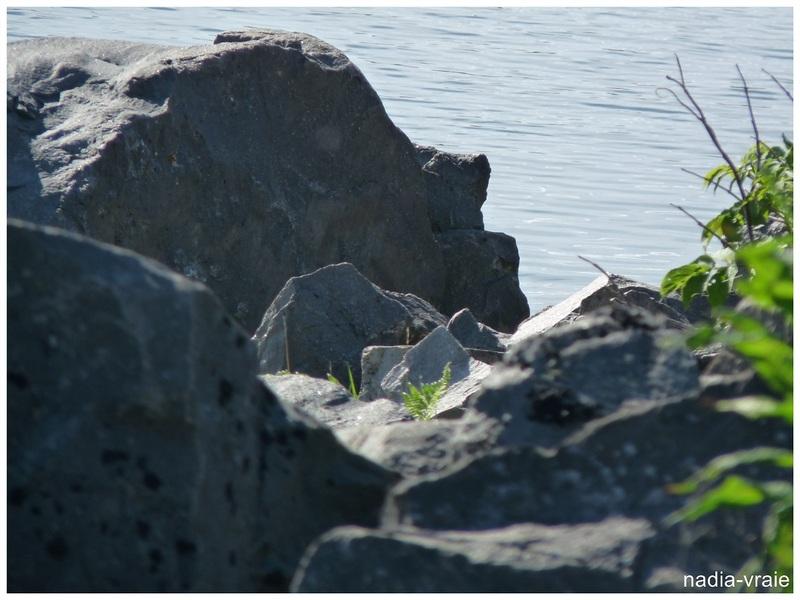 """Roche insolite. (Communauté""""Petites et grosses roches, rochers, toutes formes"""" et """"Les rendez-vous de l'insolite"""")"""