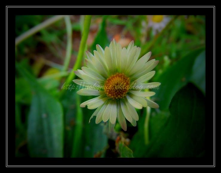 Fleurs soleils...