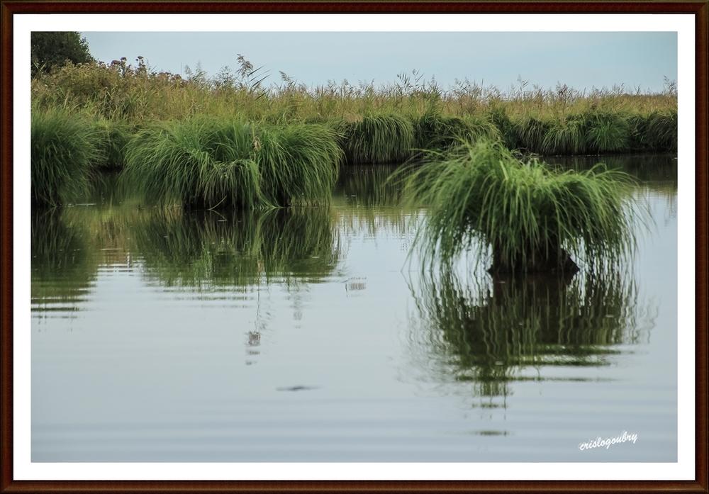 Dans le marais...