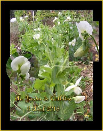Jardiner avec La Lune du 1er au 10 Avril