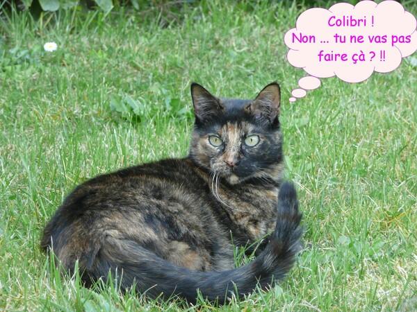 Portrait et jeux de chats dans l'herbe