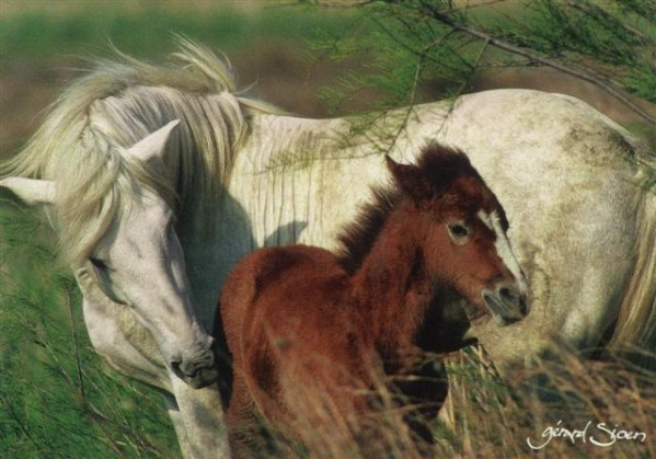 Cheval---poulain--Small-.JPG