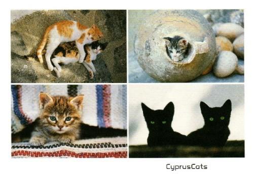 chats-de-chypre.jpg