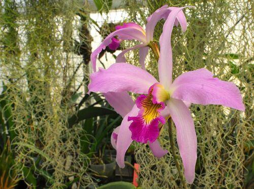 Orchidées de février