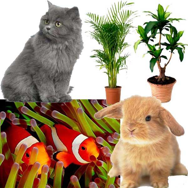 Les devoirs de l'homme envers les animaux et les plantes