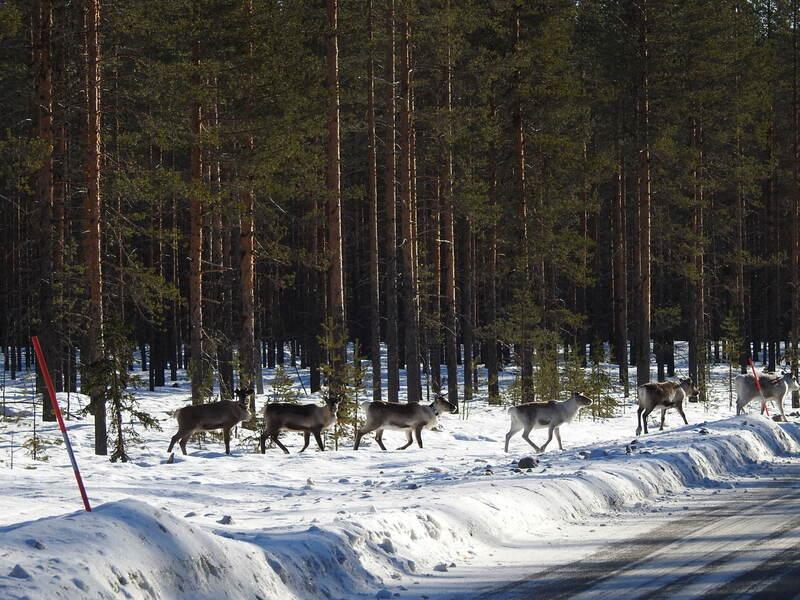 Rennes en Laponie Suèdoise