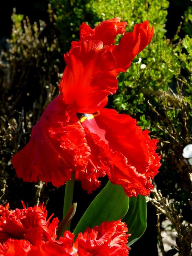 Le jardin des plantes, mais en couleur :)