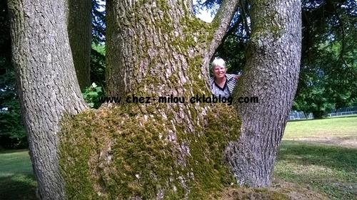 Les arbres gardent des secrets