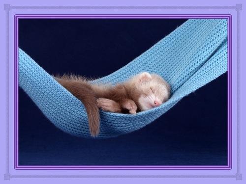Béni pendant votre sommeil