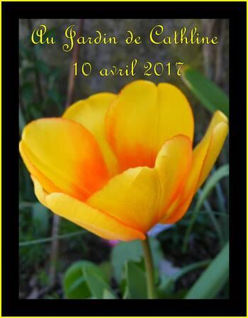 Jardiner avec la Lune du 11 au 20 Avril